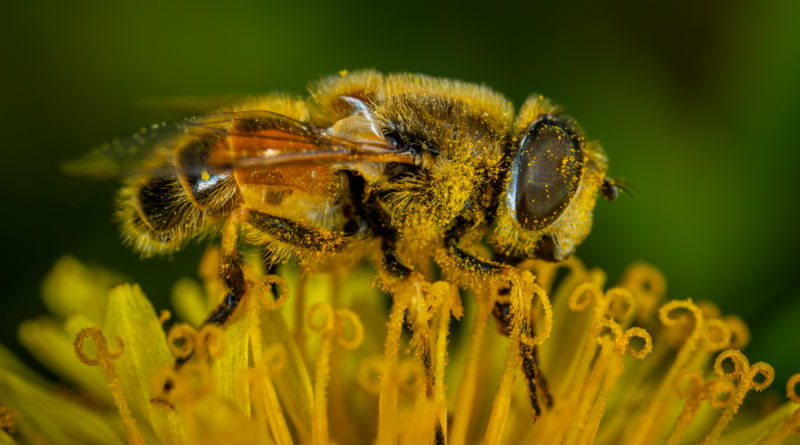matériel ruche